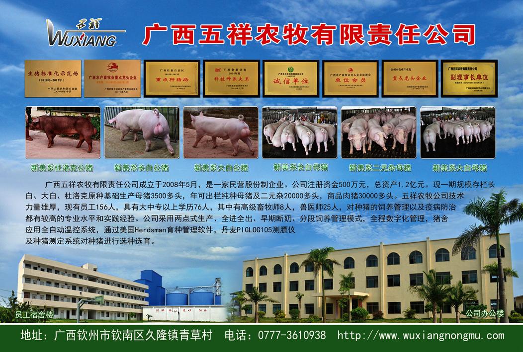 广西五祥种猪