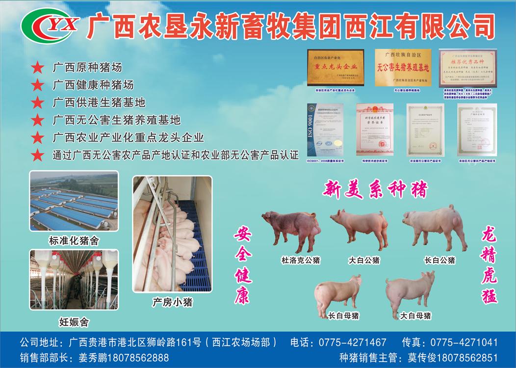广西农垦西江种猪