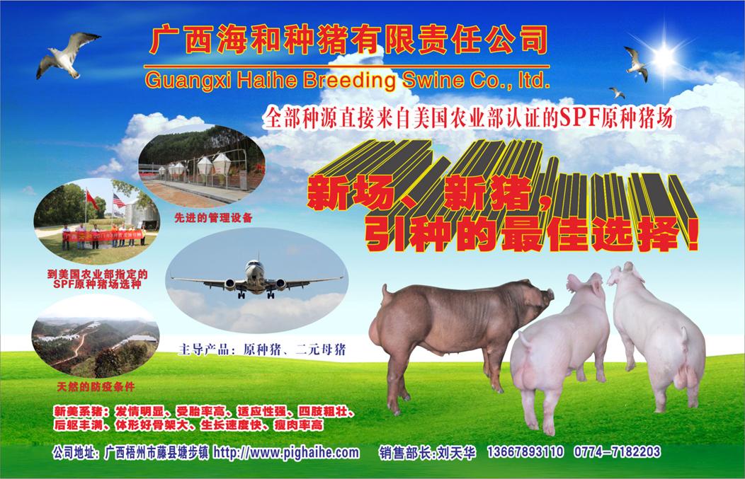 广西海和种猪