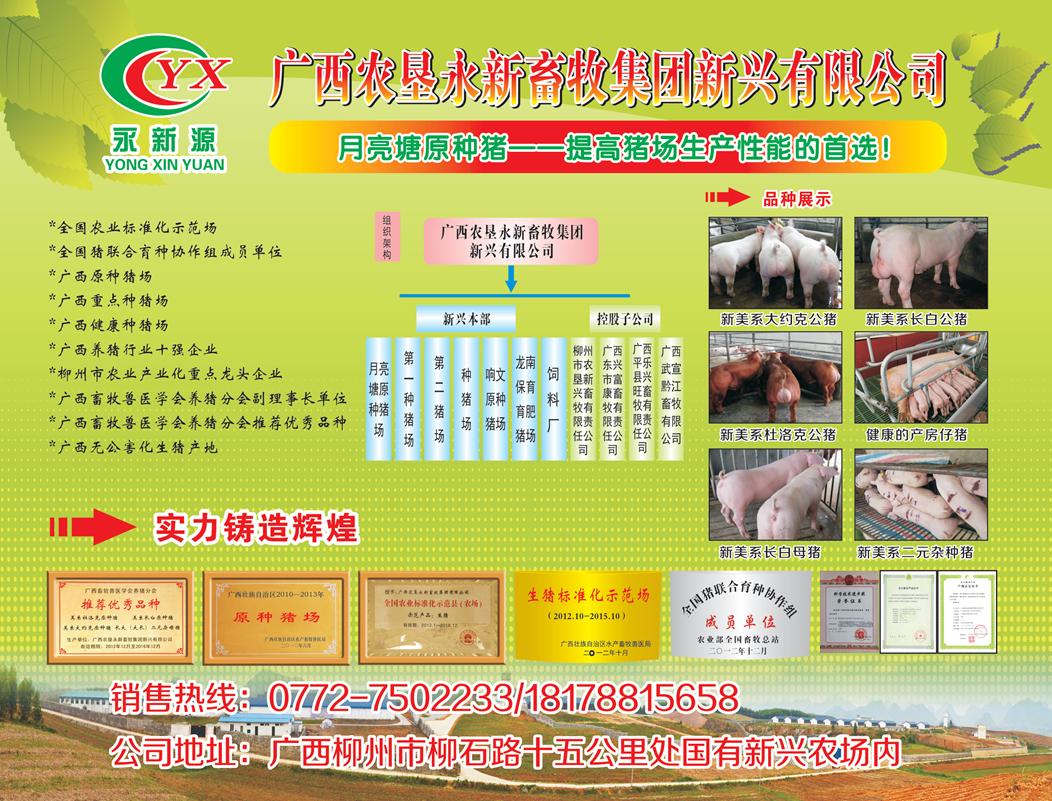 广西农垦新兴 种猪