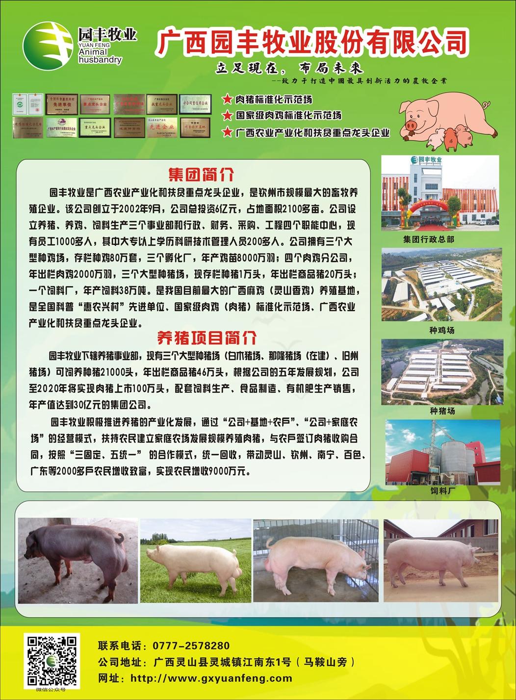 广西园丰种猪